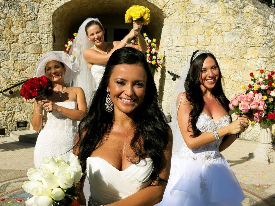 Sehen den vier Hochzeiten erwartungsvoll entgegen: Wanda (l.), Rebecca (2.v.l.), Thais (2.v.r.) und Nataly (r.) ... - Bildquelle: Richard Vagg DCL
