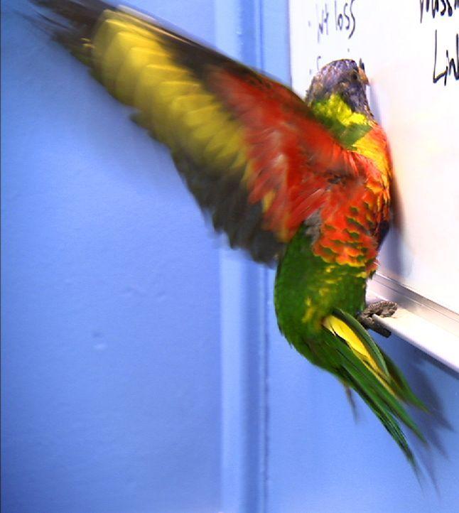 Ein Regenbogenpapagei ist heute unter anderem Patient bei Tierarzt Dr. Chris Brown ... - Bildquelle: WTFN Entertainment