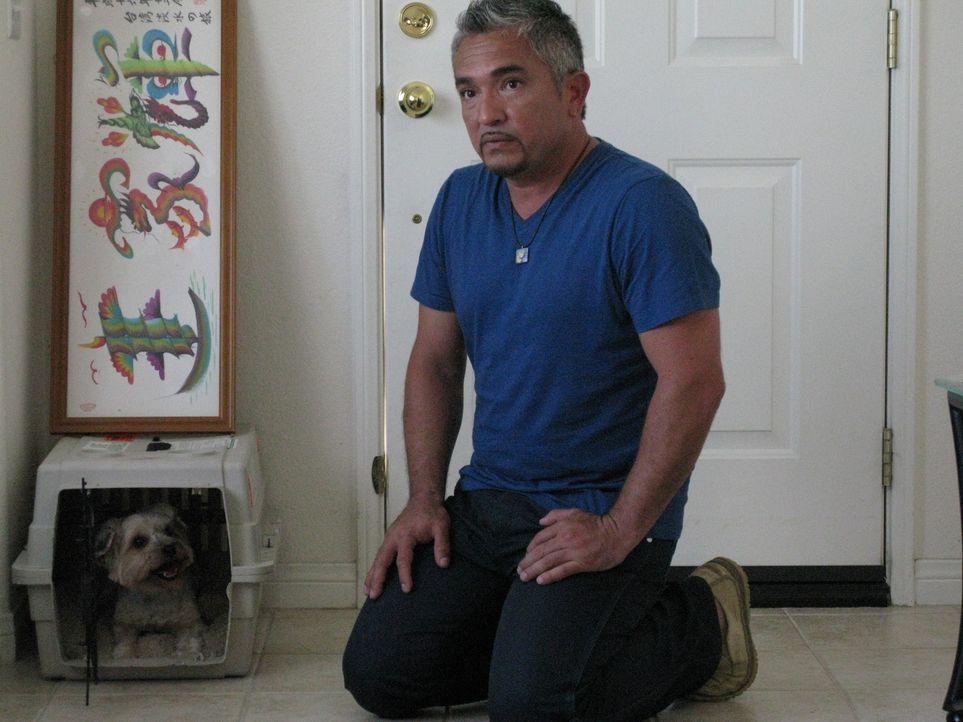 Jeff und Kelly Ong haben sich beim ersten Blick in einen Hund namens Kaylie verliebt. Das neurotische Verhalten des Tieres wurde jedoch mit der Zeit...