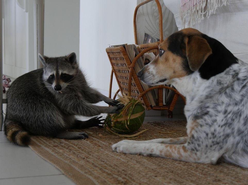 Eine Katze hat es sich zur Aufgabe gemacht, Tiere in einem Heim zu trösten u... - Bildquelle: Jörg Fockele National Geographic Channels. All Rights Reserved./  Jörg Fockele
