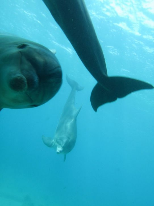 Schwimmen mit Delphin  - Bildquelle: Distaplia/reddit.com/buzzfeed.com