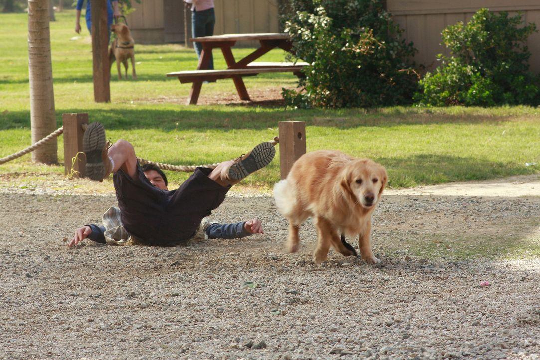 Damit hat Gabrielle nicht gerechnet: Roxy reist sich von Steve (Archie Kao) los und läuft ihr hinterher ... - Bildquelle: ABC Studios