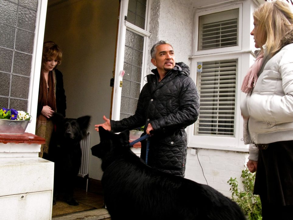 Cesar Millan (M.) ist auf großer Hundeflüsterer-Mission quer durch Großbritannien ... - Bildquelle: 2014 Rive Gauche Television. All rights reserved.