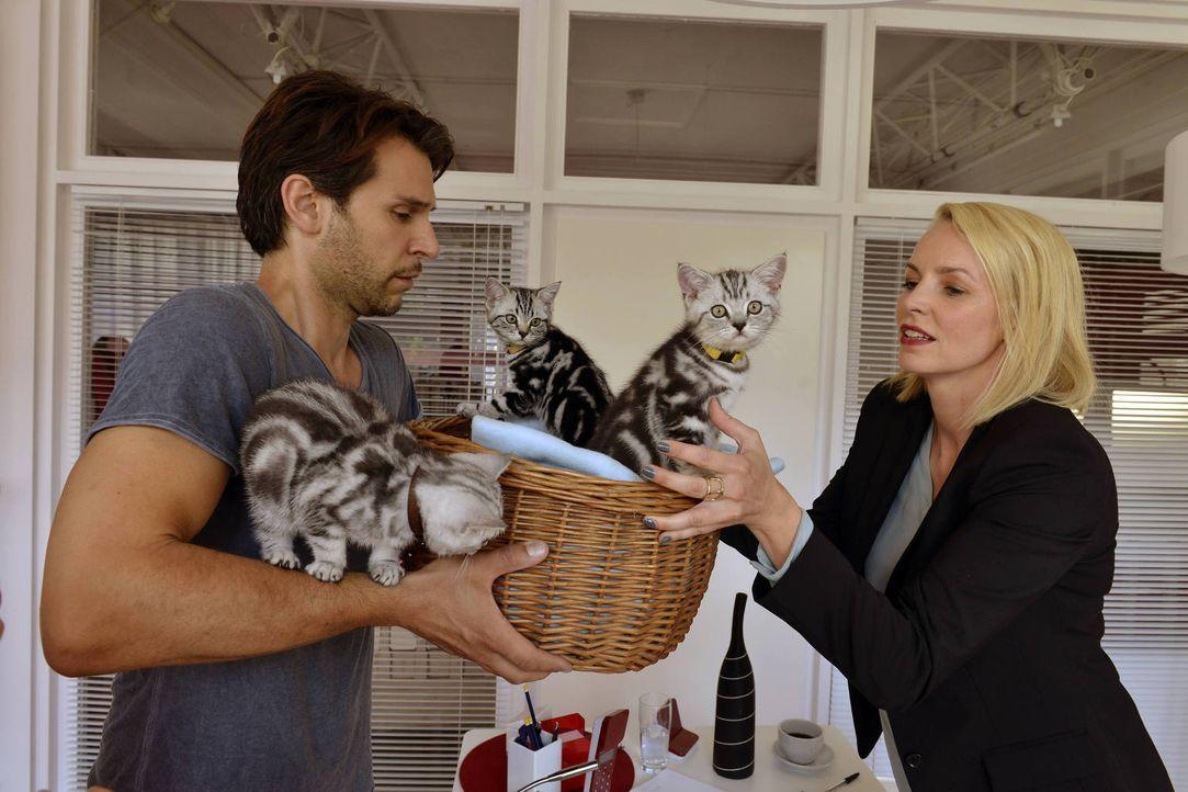 Theresa (Simone Hanselmann, r.) entwickelt Muttergefühle, als Nick (Florian Odendahl, r.) die Katzenbabys ins Büro bringt ... - Bildquelle: Oliver Ziebe Sat.1