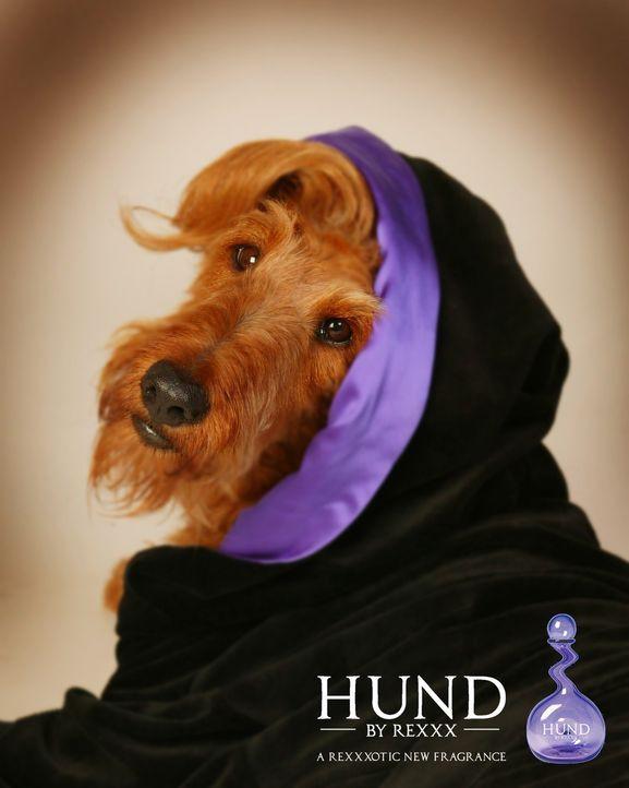 Als erfolgreichster Hund schmückt Rexx sämtliche Titelbilder ... - Bildquelle: New Regency Productions, Inc.