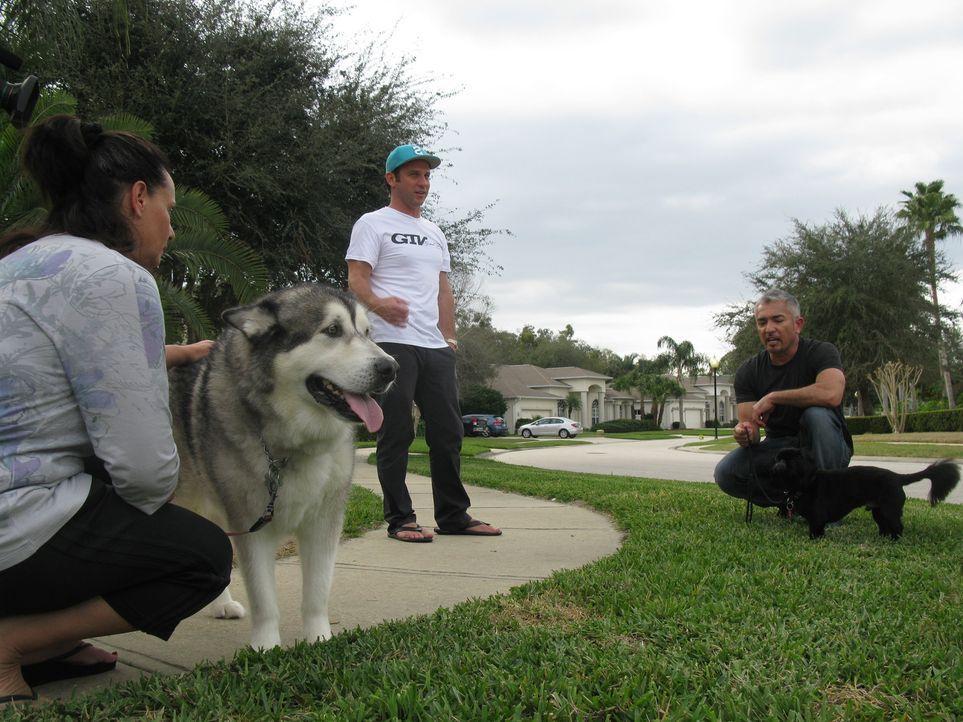 Heute stattet Cesar (r.) dem Rennfahrer Kevin Harvick (M.) einen Besuch ab. Familienhund Lo bellt fast ununterbrochen und schnappt nach jedem, der i... - Bildquelle: Ryan Cass MPH - Emery/Sumner Joint Venture