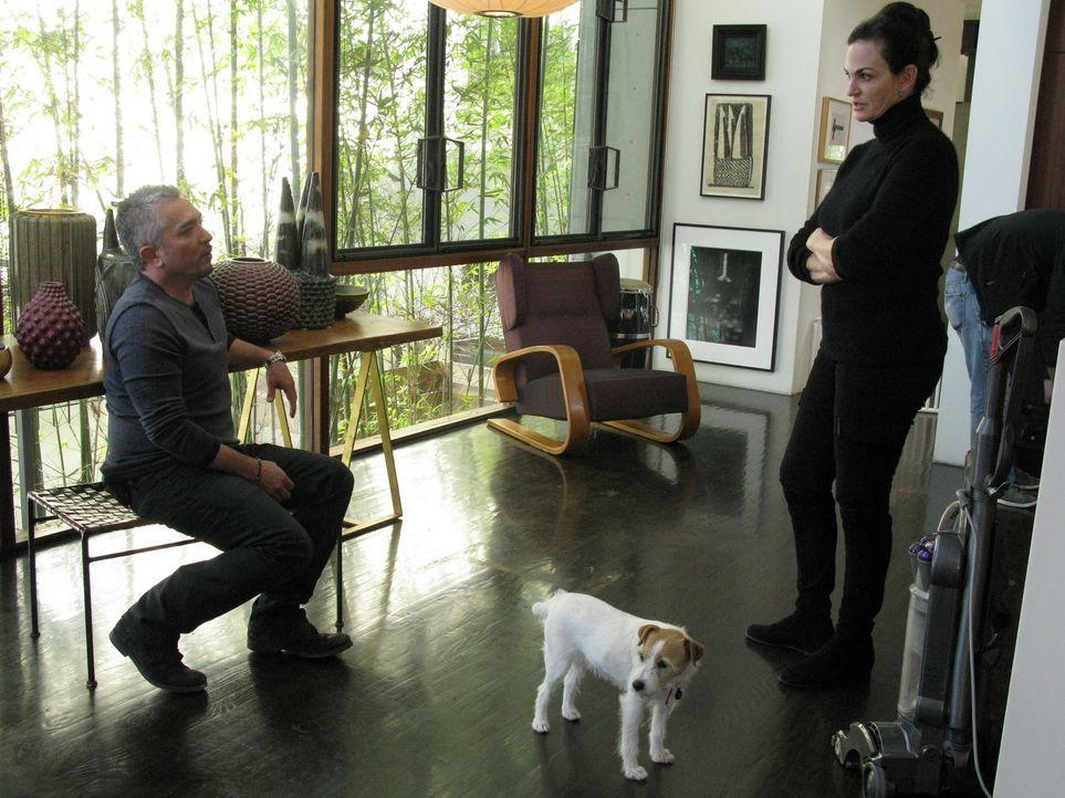 Cesar (l.) gibt heute einen Einblick in die hohe Kunst der Hundepsychologie. Wie gelingt es ihm, die Energie eines Tieres zu spüren? Wie schafft er... - Bildquelle: Ryan Cass MPH - Emery/Sumner Joint Venture