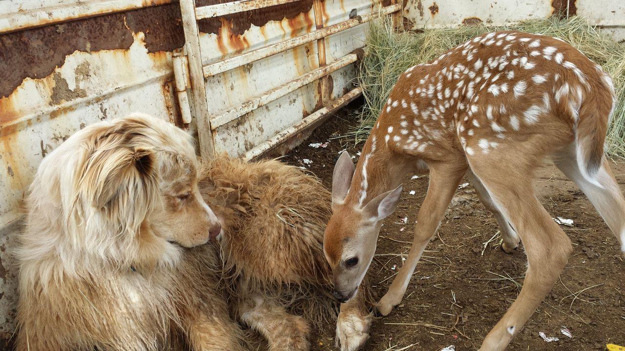 Der Hund und das Kitz - Bildquelle: Miranda Stidham National Geographic Channels / Miranda Stidham