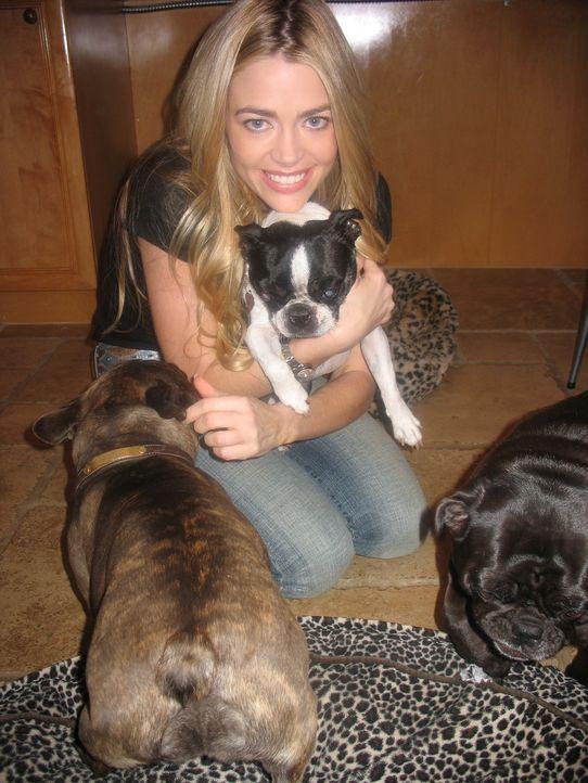 Die Schauspielerin Denise Richards ist sehr tierlieb und sie verwöhnt ihre Hunde, wo sie nur kann. - Bildquelle: Rive Gauche Intern. Television