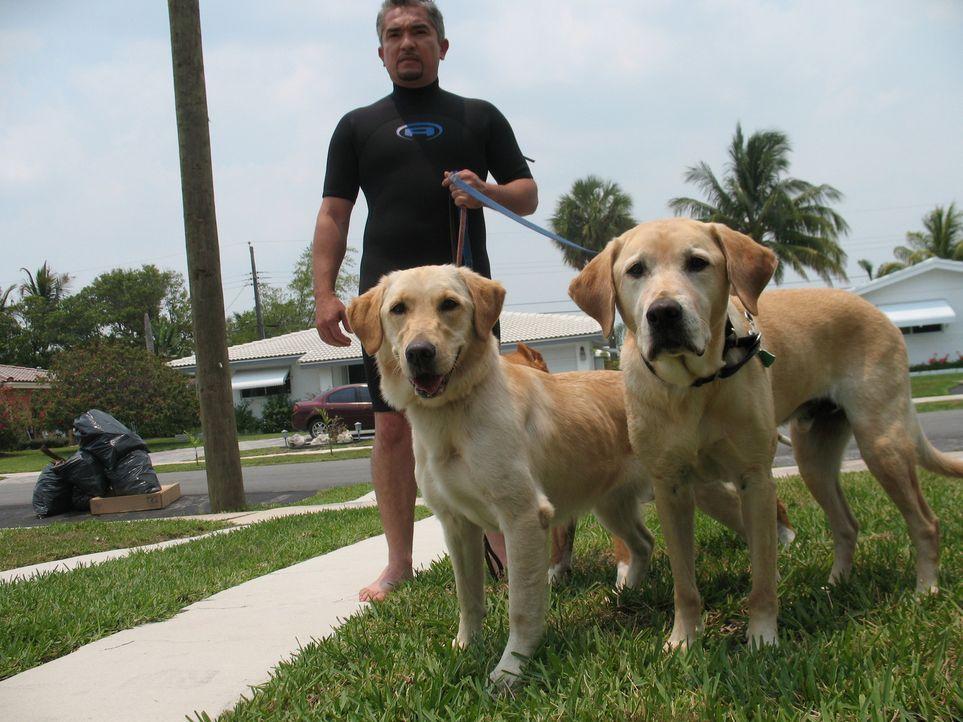 Der schwer traumatisierte Spezialagent Gavin war einst ein echter 007 unter den Hunden. Als Sprengstoffhund bei der US-Bundespolizeibehörde war der... - Bildquelle: Rive Gauche Intern. Television