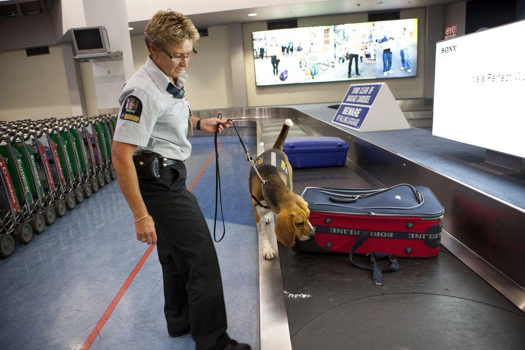 Haschisch im Koffer - Bildquelle: Greenstone TV Ltd