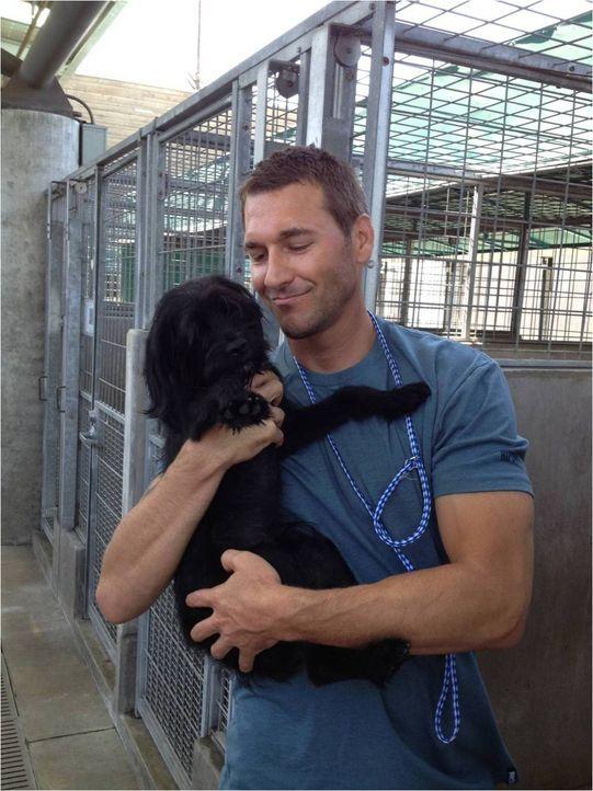 Auch Brandon McMillan muss sich den Hürden einer Hundeadoption stellen, doch so schnell lässt sich der Hundetrainer nicht abschrecken ... - Bildquelle: Bryan Curb Litton Entertainment 2013