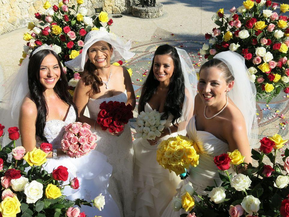 Kämpfen um den Titel und eine atemberaubende Hochzeitsreise: Nataly (l.), Wanda (2.v.l.), Thais (2.v.r.) und Rebecca (r.) ... - Bildquelle: Richard Vagg DCL