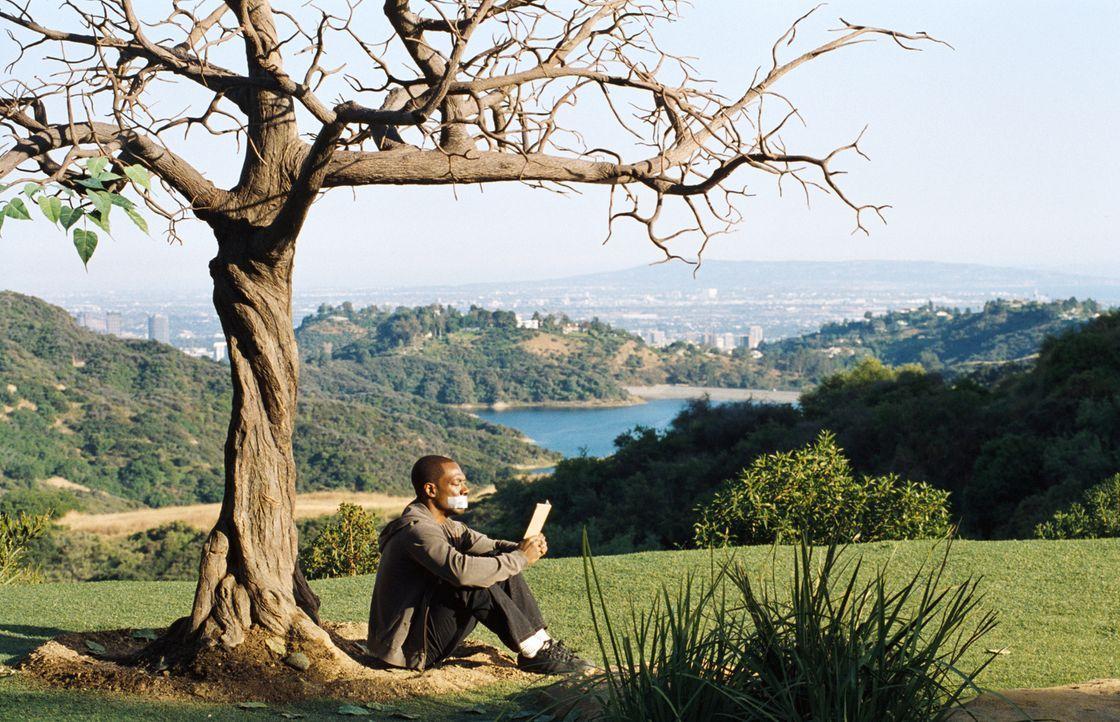 Seine letzte Überlebenschance: Sollte der magische Baum in seinem Garten alle Blätter verlieren, muss Jack McCall (Eddie Murphy) sterben. Doch wird... - Bildquelle: (2012) DW Studios L.L.C. All rights reserved.