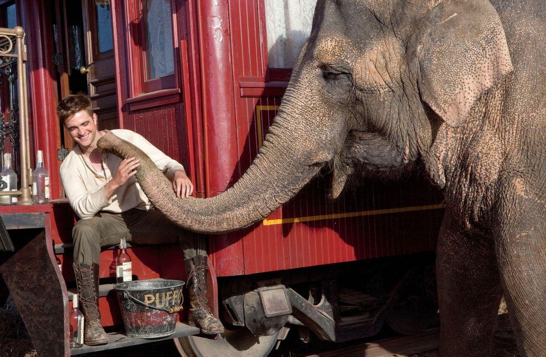 Durch Zufall gerät der junge Tierarzt Jacob (Robert Pattinson) zu einem Wanderzirkus. Dort soll er sich um die Tiere kümmern, insbesondere um die El... - Bildquelle: David James 2011 Twentieth Century Fox Film Corporation. All rights reserved. / David James