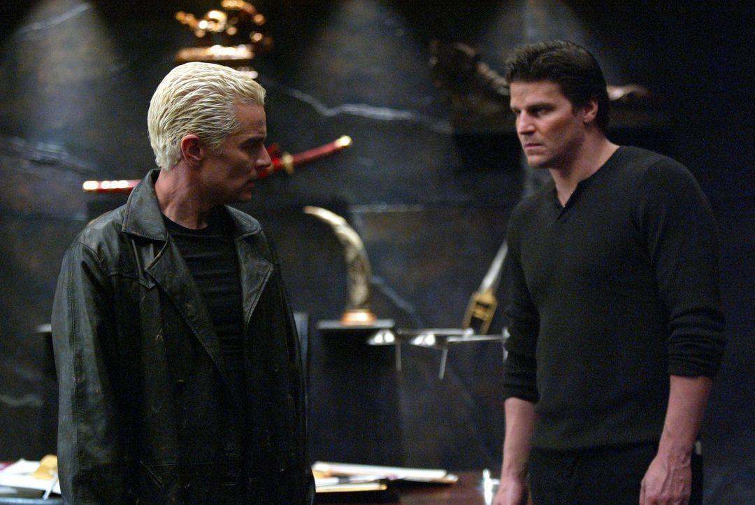 Angel (David Boreanaz, r.) wird aus Spike (James Marsters, l.) nicht ganz schlau. Ist er nun der böse William the Bloody, oder stimmt es, dass er je... - Bildquelle: The WB Television Network