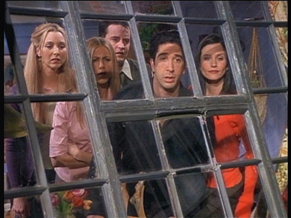 (v.l.n.r.) Phoebe (Lisa Kudrow), Rachel (Jennifer Aniston), Chandler (Matthew Perry), Ross (David Schwimmer) und Monica (Courteney Cox) wollen wiede... - Bildquelle: TM+  2000 WARNER BROS.