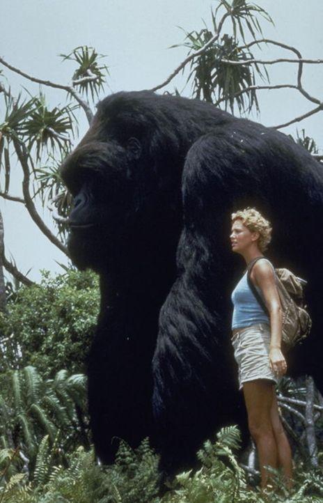 Mitten in den Pangani-Bergen Zentralafrikas leben Gorilla Joe und Jill (Charlize Theron) zusammen und glücklich. Nichts kann die beiden trennen, de...