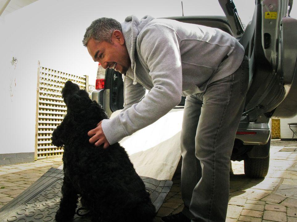 Cesar Millan ist auf großer Hundeflüsterer-Mission quer durch Großbritannien ... - Bildquelle: 2014 Rive Gauche Television. All rights reserved.
