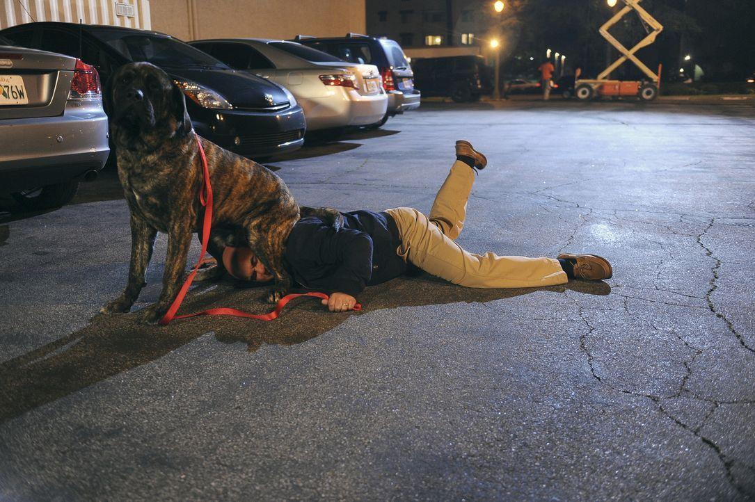 Bobbys neuer Hund macht Andy (Ian Gomez) einen Strich durch die Rechnung. Eifersüchtig muss er erkennen, dass der Vierbeiner seinen Freund mehr in... - Bildquelle: 2009 ABC INC.