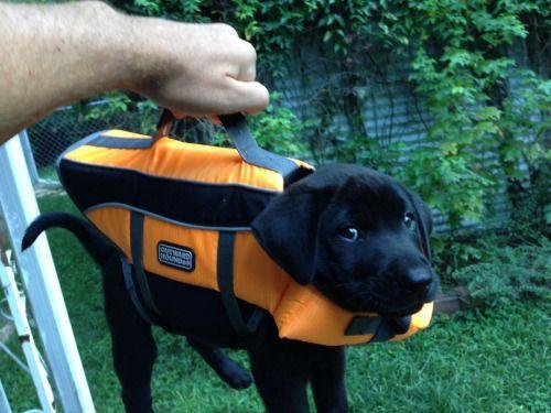 Welpe: Jacke fungiert als Tasche - Bildquelle: Tumblr
