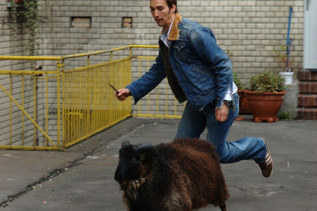 Um die Familie seiner türkischen Freundin zu gewinnen, muss Götz (Florian David Fitz) sogar anlässlich einer Beschneidungsfeier ein Schaf schäch... - Bildquelle: ProSieben