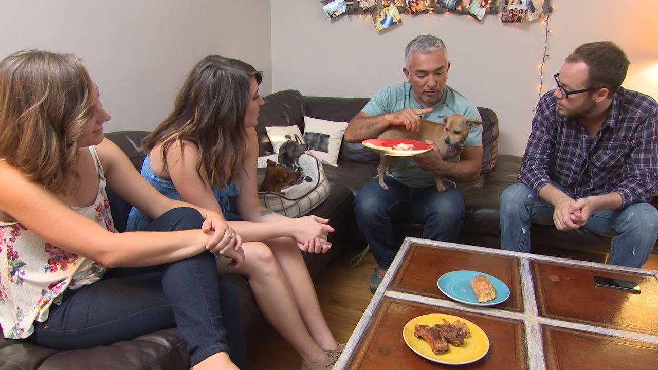 Cesar (2.v.r.) bekommt einen Notruf von Ivan (r.), der mit seiner Freundin Amber (2.v.l.), deren Schwester Ashley (l.) und drei Chihuahuas zusammenw... - Bildquelle: NGC/ ITV Studios Ltd