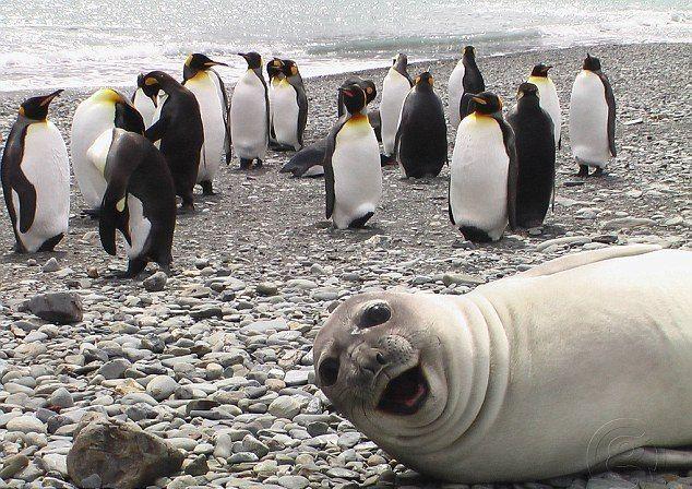 Seelöwe und Pinguine - Bildquelle: G Adventures