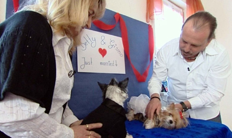 Lisa (18) ist auf ihre Mama stinksauer: Mutter Susi (45) kümmert sich den ganzen Tag nur um ihre 13 Yorkshire-Terrier. - Bildquelle: ProSieben