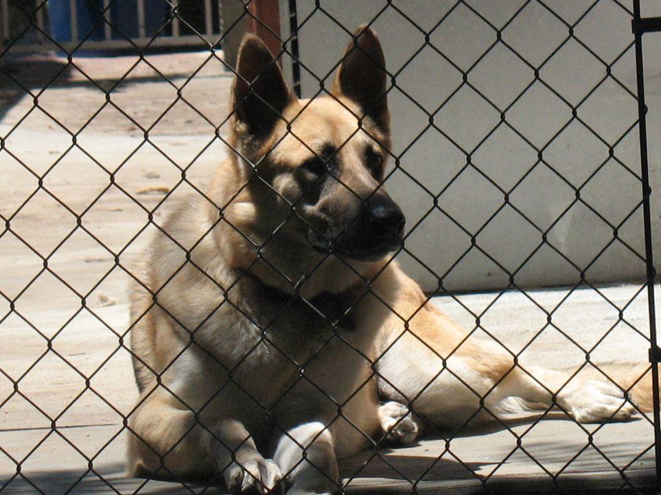 Tierliebhaberin Edie Adler kann einfach an keinem verlassenen Hund oder verletzten Vogel vorbeigehen, ohne ihn mitzunehmen und aufzupäppeln. Ihr neu... - Bildquelle: Rive Gauche Intern. Television