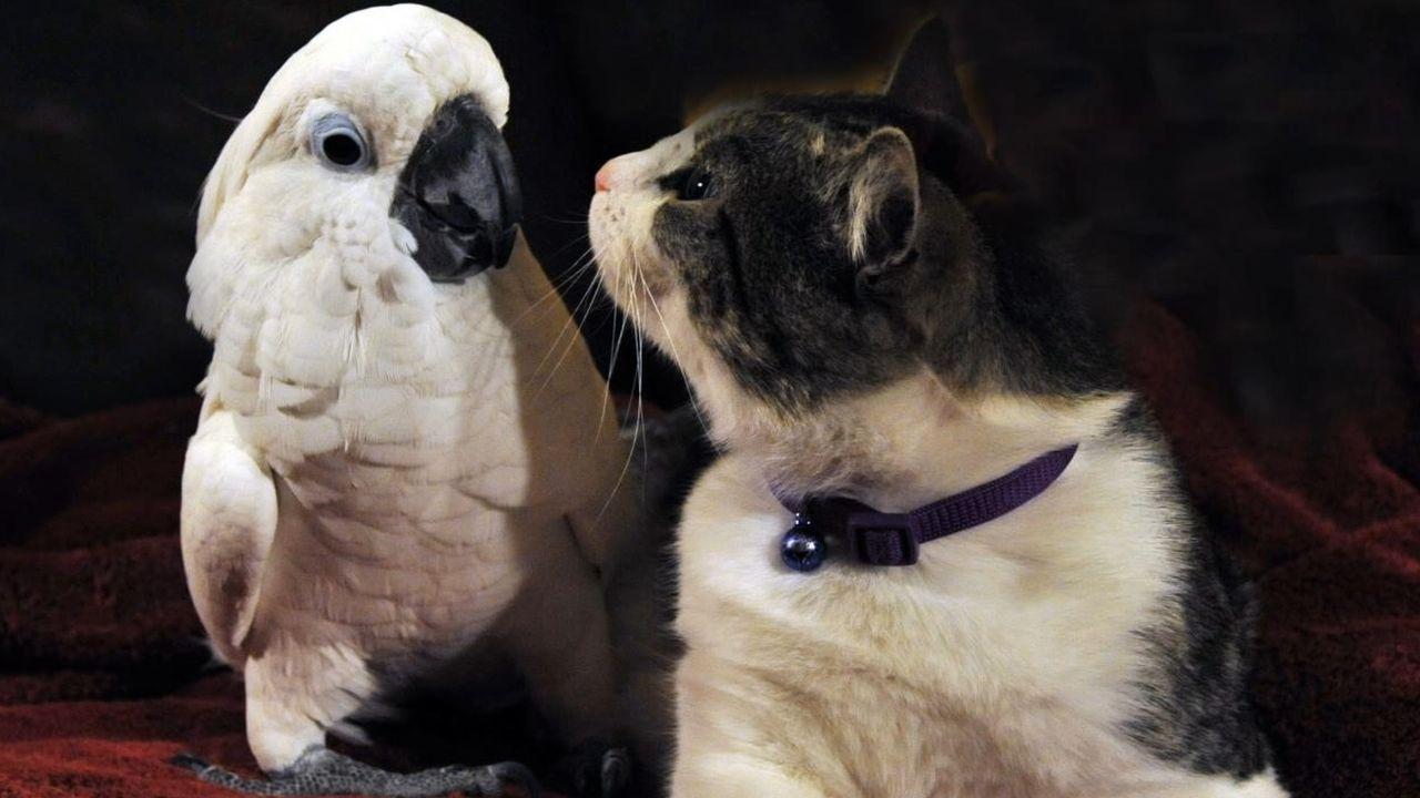 Der junge Jeremy ist seiner Hauskatze Tara auf ewig dankbar, denn sie hat ih... - Bildquelle: National Geographic Channels