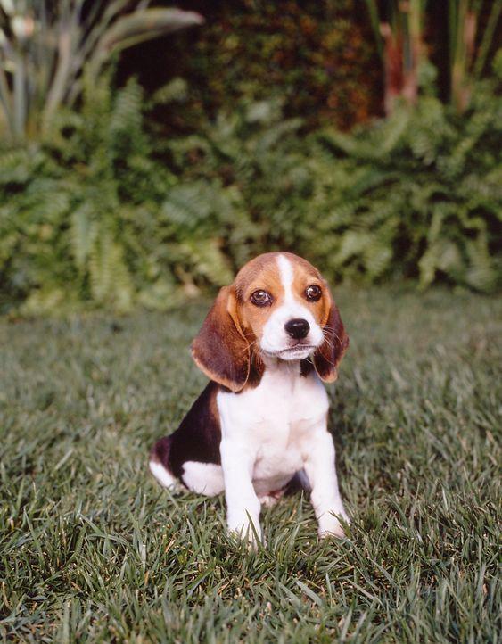 Audie (Puppy) - Bildquelle: Paramount Television
