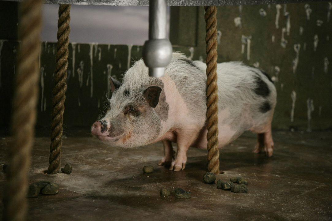 Ist das Trüffelschwein Pigby etwa der Täter, der Schwester Larue vom Turm gestoßen hat? - Bildquelle: Warner Brothers