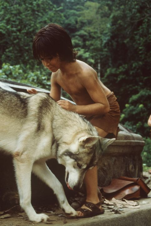 Als Wölfe im indischen Urwald ein kleines Menschenbaby (James Williams) finden, ziehen sie es wie ihr eignes Kind auf ... - Bildquelle: MDP WORLDWIDE