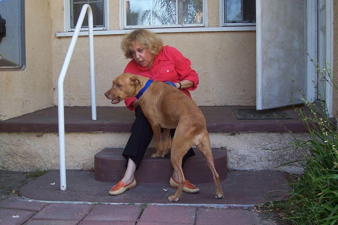 Judi hat einen neuen Freund und der hat auch einen Hund. Das Problem: die beiden Hunde vertragen sich überhaupt nicht. Sie hoffen auf die Hilfe vom... - Bildquelle: Rive Gauche Intern. Television