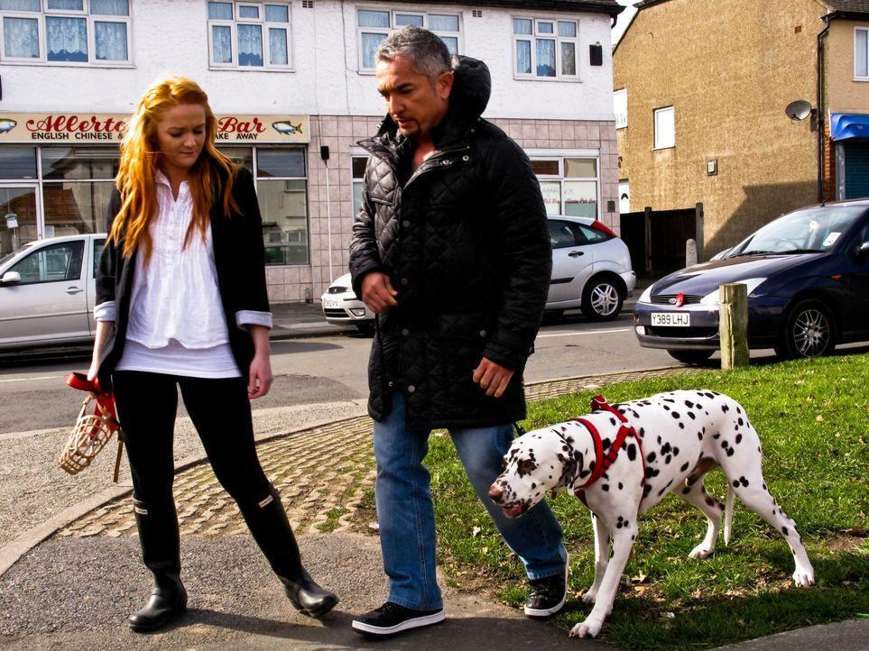 Auch die Briten haben von Cesar Millans (r.) Erfolgen als Hundeflüsterer gehört und so macht sich der Experte auf den Weg in das Königreich ... - Bildquelle: 2014 Rive Gauche Television. All rights reserved.