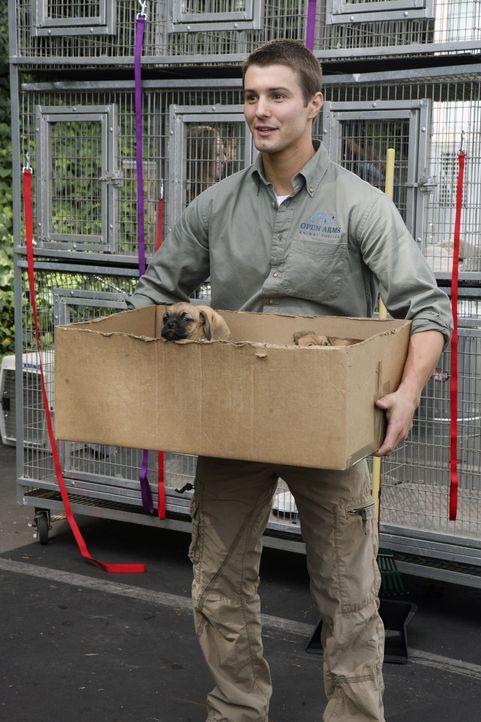 Bei der freiwilligen Sozialarbeit im Tierheim lernt Casey Jonah (Jerad Anderson) kennen, der ihr schockierende Neuigkeiten mitteilt ... - Bildquelle: ABC Family