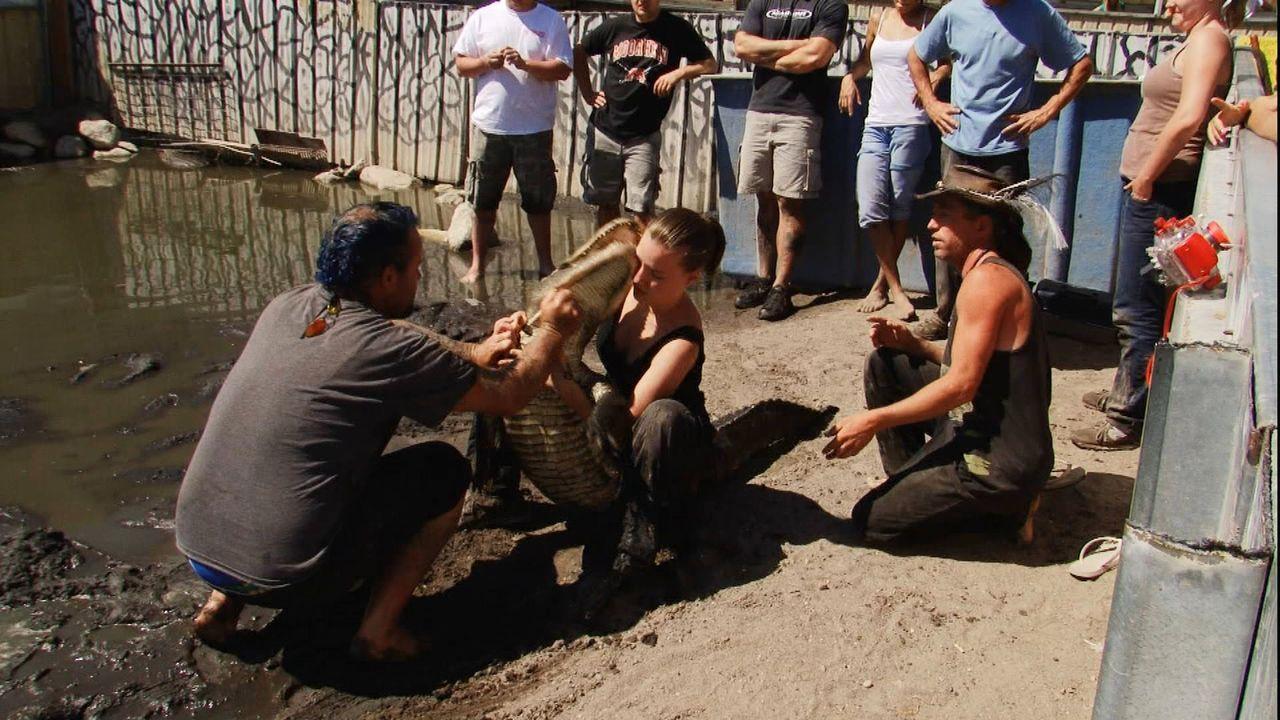 Hier fließen gleich dicke Krokodilstränen: Tiertrainerin Ines Hubler (M.) ringt mit einem Alligator und wird dabei von ihm ins Gesicht gebissen. - Bildquelle: 2011, The Travel Channel, L.L.C.