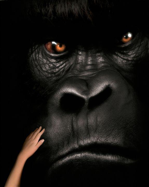Mitten in den Pangani-Bergen Zentralafrikas leben Joe und Jill. Nichts kann die beiden trennen, denn Jill, eine junge Frau und Joe, ein vier Meter g... - Bildquelle: Ron Batzdorff Disney Enterprises Inc.