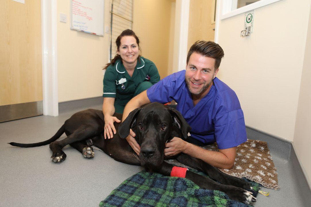 James untersucht Hund Luther, der für einen Welpen bereits eine beachtliche ... - Bildquelle: True North