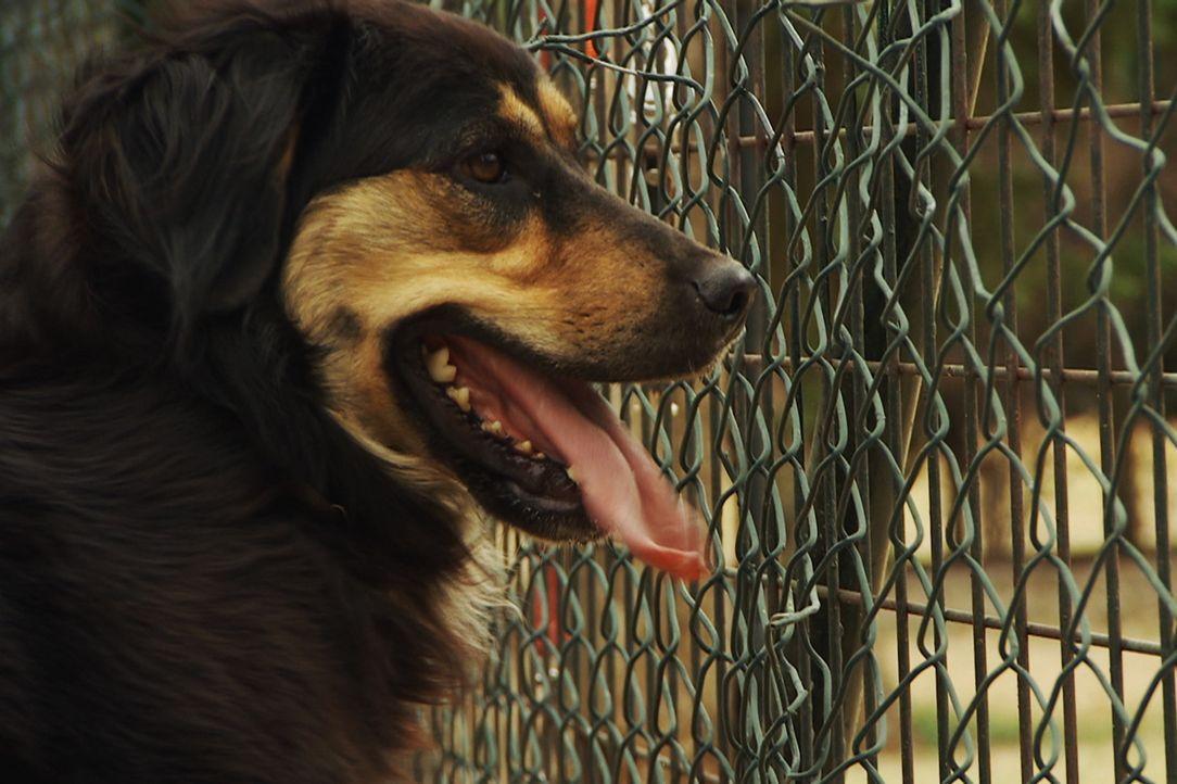 Sophia hatte die schlechtesten Erfahrungen, die Hunde mit Menschen erleben können ... - Bildquelle: Belén Ruiz Lanzas 360 Powwow, LLC / Belén Ruiz Lanzas