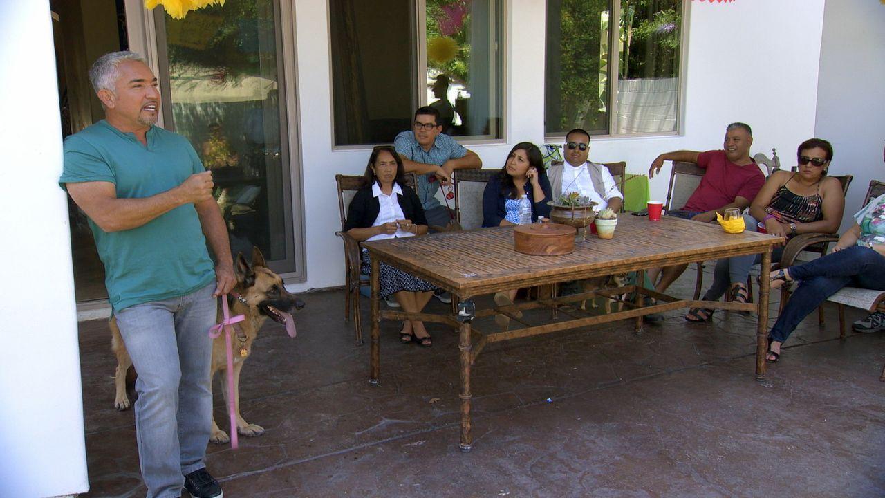 Cesar (l.) versucht, Ron und seiner Familie klarzumachen, wie sie sich verhalten müssen, damit auch der Hund Savannah bei keiner Familienfeier mehr... - Bildquelle: National Geographic Channels