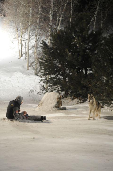 Beim Absprung aus dem Lift, bricht sich Dan (Kevin Zegers) beide Beine. Dumm nur, dass hungrige Wölfe in der Gegend beheimatet sind ... - Bildquelle: Fred Hayes Frostbite Features, Inc. / Fred Hayes
