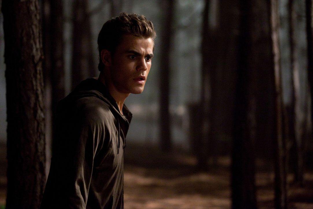 Findet sich einer furchteinflößenden neuen Gefahr in den Wäldern gegenüber: Stafan Salvatore (Paul Wesley)... - Bildquelle: Warner Brothers
