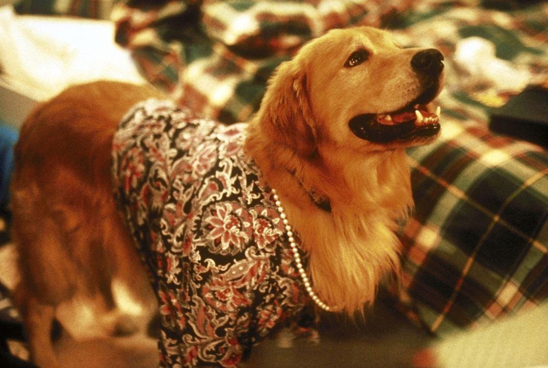 Weil Wunderhund Buddy eine Menge Kunststücke beherrscht, hofft er, seinem Herrchen aus der prekären Situation helfen zu können ... - Bildquelle: Alliance
