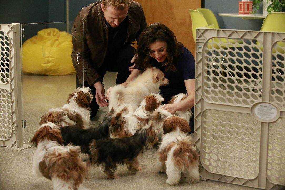 Während April vor einer schwierigen Entscheidung steht, hat Owen (Kevin McKidd, l.) eine ganz besondere Überraschung für Amelia (Caterina Scorsone,... - Bildquelle: Mitchell Haaseth ABC Studios