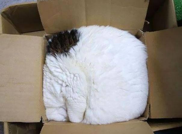 Schlaf-Katze 1