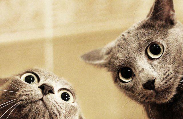 Graue Katzen - Bildquelle: Pinterest