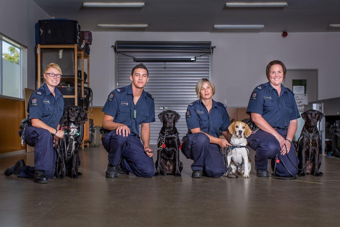 Ben und sein Spürhund Ox werden zu einem nächtlichen Einsatz in Wellington g... - Bildquelle: Greenstone TV Ltd