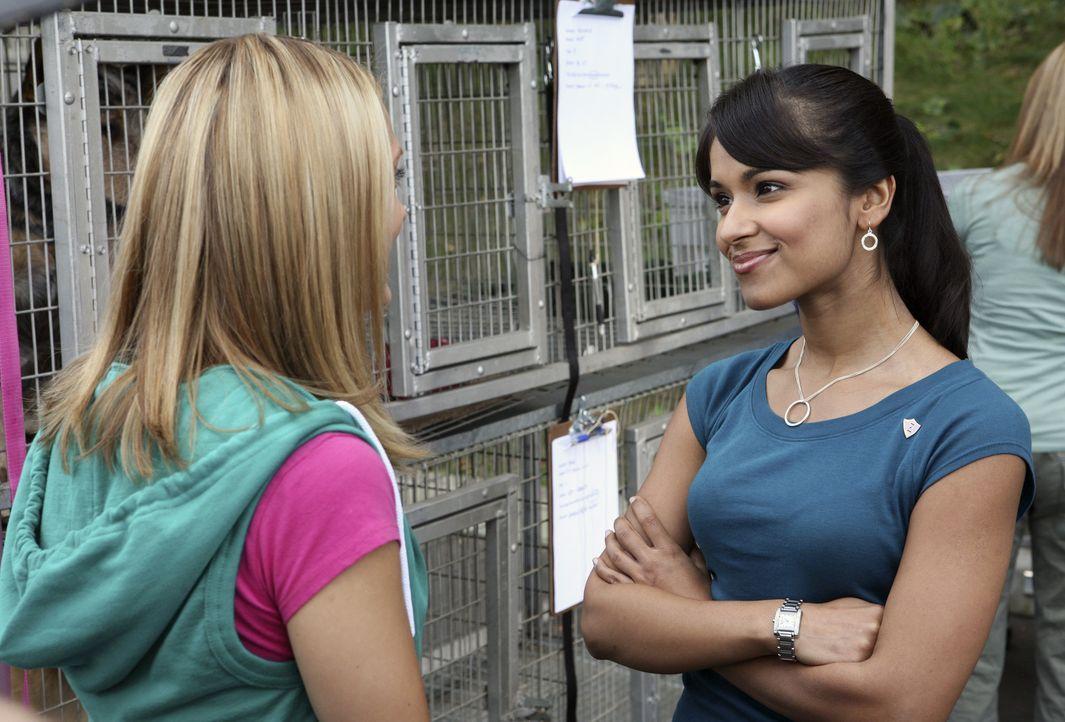 Projektwochen in den Studentenverbindungen: Rebecca (Dilshad Vadsaria, r.) und Casey (Spencer Grammer, l.) müssen im Tierheim zusammenarbeiten, was... - Bildquelle: ABC Family